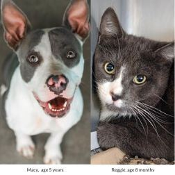Photos of a dog and a cat looking at camera