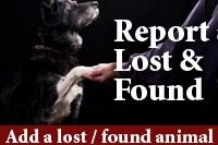 Report Lost and Found: Add a lost and found animal.