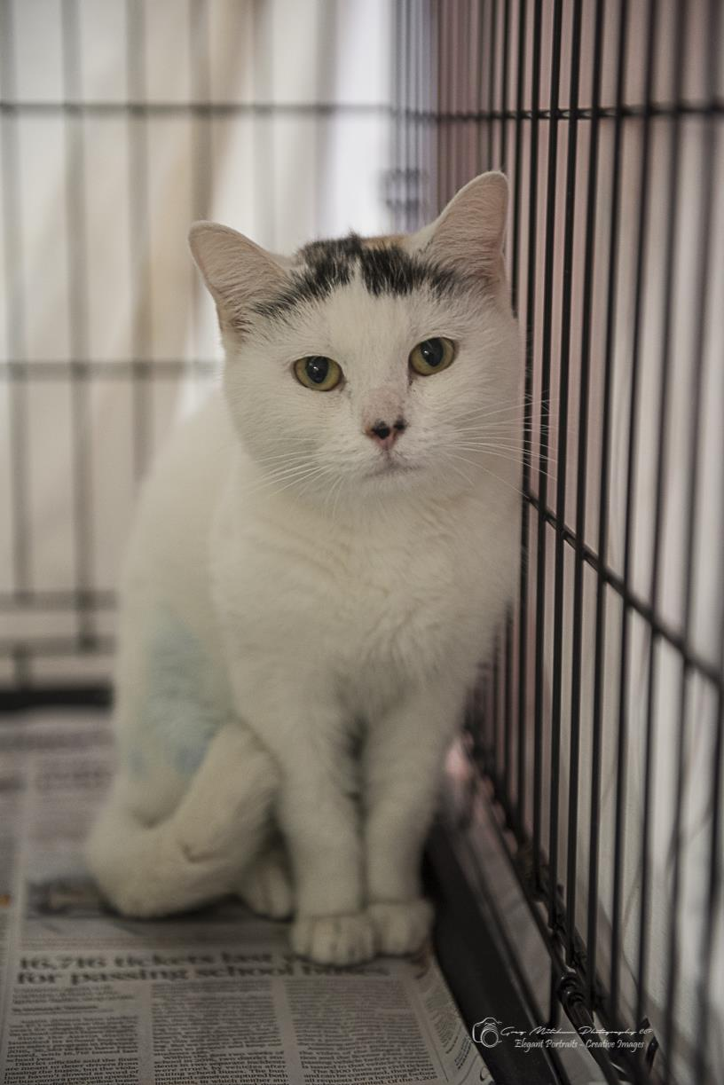 White and black cat in cage looking at camera