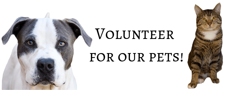 Volunteer for our pets