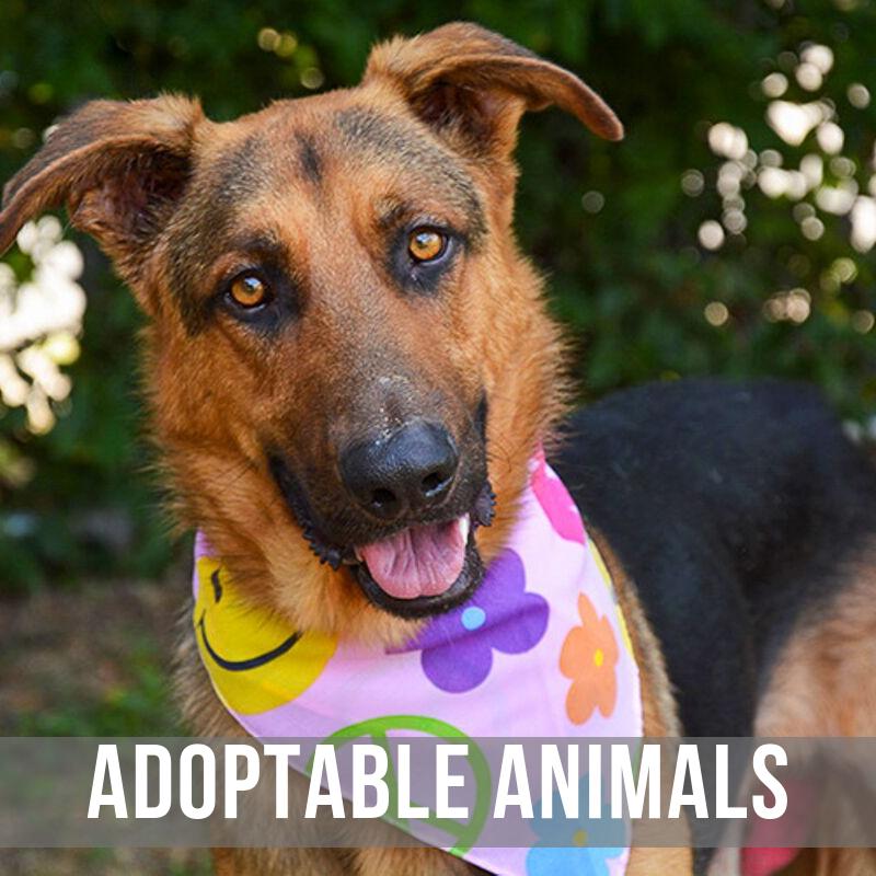 Adopt A Pet Victoria Tx Petfinder