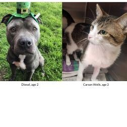 Diesel and Carson Wells are Pets of the Week