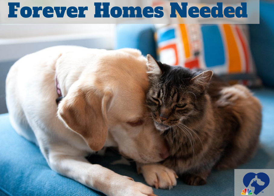 "Photo of dog and cat cuddling with ""Forever Homes Needed"" headline, Clear the Shelters logo."